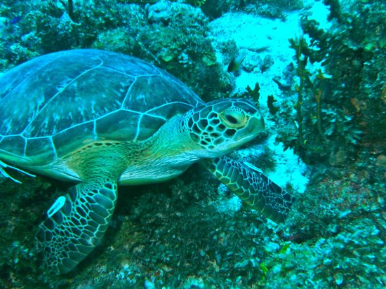 Bamboo Bali Bonaire - Boutique Resort: east coast diving