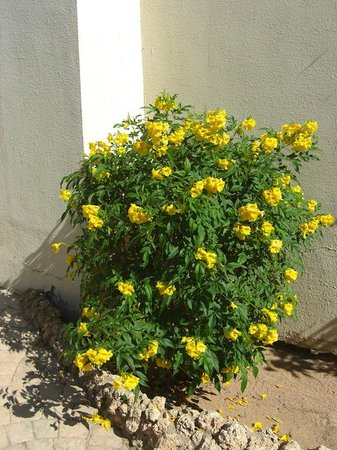 Island View Resort:                                                                         Flowering Shrub