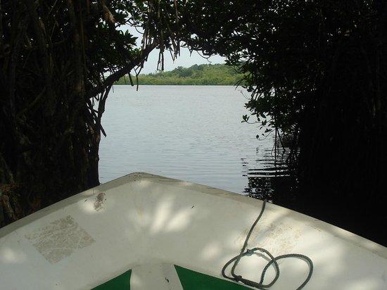 Roman Lake Hotel: mongrove