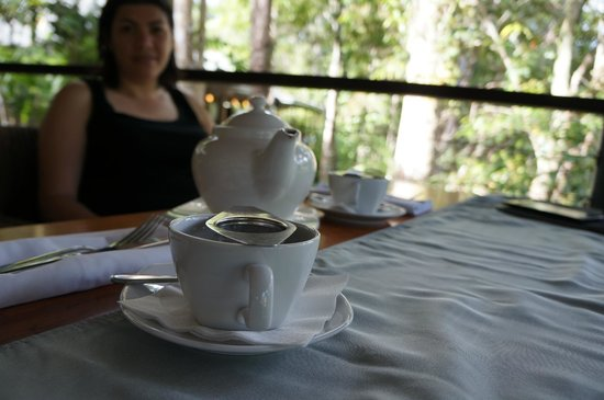 Treehouse Restaurant:                   Tea