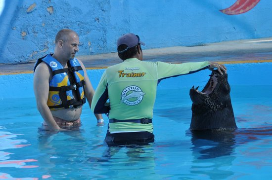 Dolphin Discovery Puerto Vallarta:                   Pepe