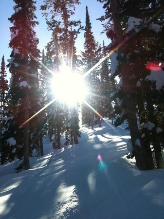 Beaver Mountain:                   Deep in the trees off of a run called Sunshine