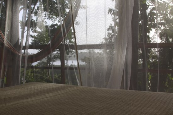 La Loma Jungle Lodge and Chocolate Farm: View waking up in the morning