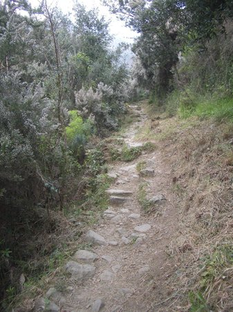 Hotel Il Saraceno: The path