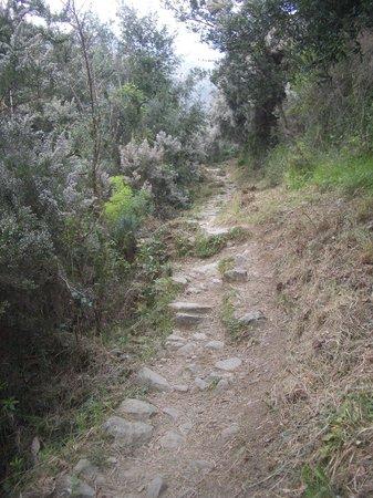 Hotel Il Saraceno : The path