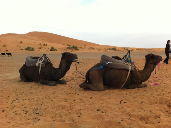 Sahara Aventures Travel -Day Tours: Sahara