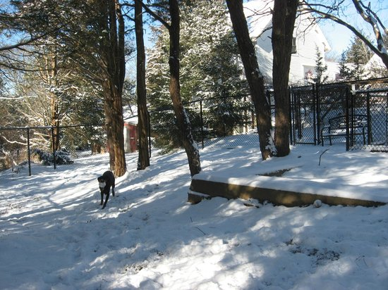 The Painted Dog: winter fun in the dog park