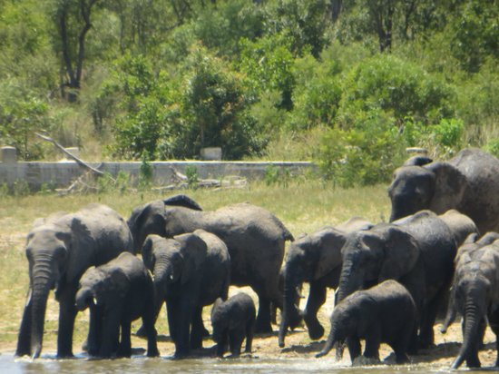 Arathusa Safari Lodge: visiting our watering hole