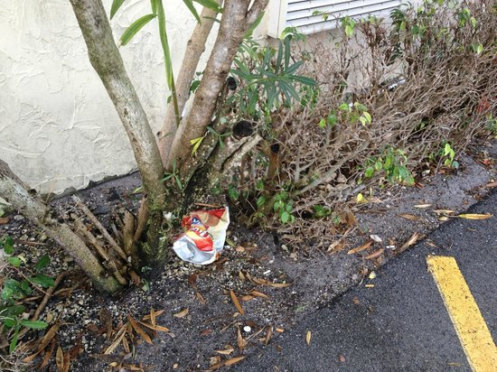 Super 8 Pompano Beach:                   Perhaps litter is looked upon here as decorations