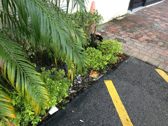 Super 8 Pompano Beach:                   Litter near entrance.