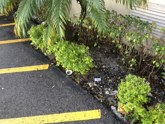 Super 8 Pompano Beach:                   Litter all along side of the building.