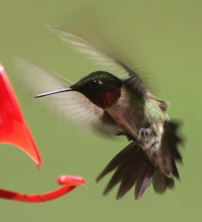 Namaste Esperanza An Integrated Wellness Retreat: Hummingbirds in summer