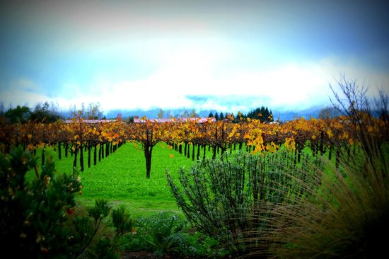 Frog's Leap Winery: Amazing Views from Porch