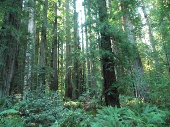 Stout Grove: Along the trail