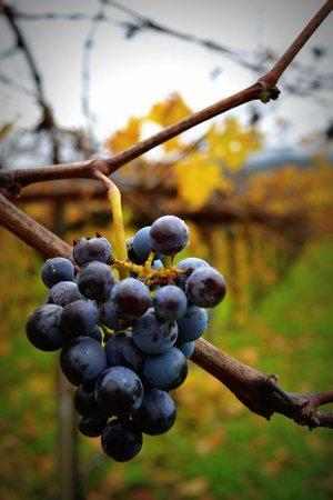 Peju Province Winery: PEJU