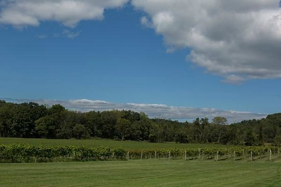 Four Sisters Winery at Matarazzo Farms: Vineyards of the 250 acre farm