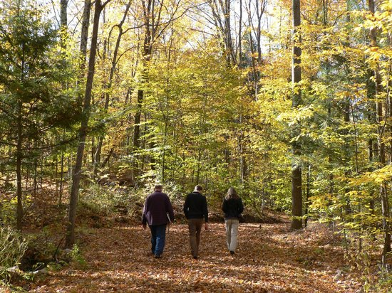 The Deakin's on MountainView : Guided Forest Walk