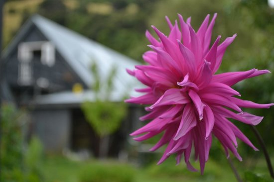 Halfmoon Cottage: Lots of beautiful flowers