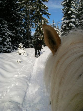 Posthotel Achenkirch:                   idyllic alpine woods horseride - such cute ears!