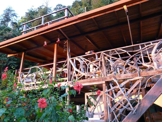 Lookout Inn Lodge: Balcony where drinks are served and meals for a wild scarlet macaw!