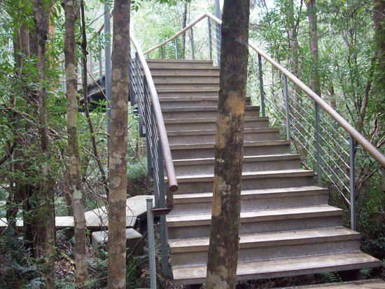 Tarkine Forest Adventure: Stairway to heaven