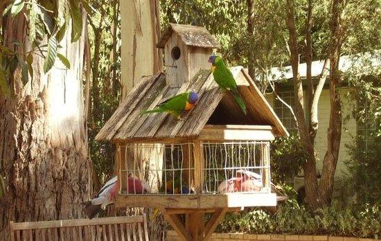 Crystal Brook Tourist Park:                   Bird feeder
