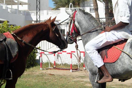 El Mouradi Djerba Menzel:                   The horses