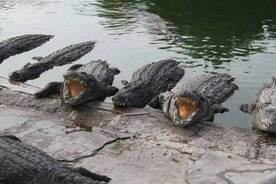 El Mouradi Djerba Menzel:                   The crocodile park, down the road form the hotel