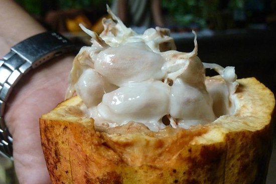 ‪‪Tirimbina Biological Reserve‬: Inside a coco fruit