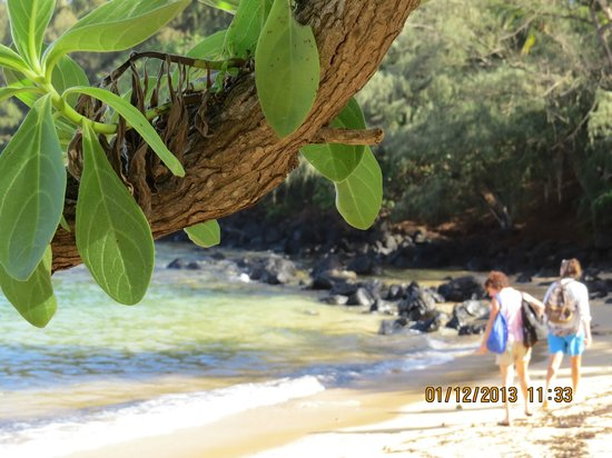 Kauai Beach Resort:                   Fab photo ops abound