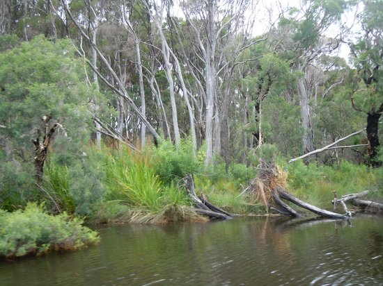 Donnelly River Cruises:                   up close to the prestine flora nad fauna of the beautiful D'Entrecasteaux Nari