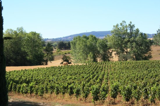 Agriturismo La Sovana:                   View