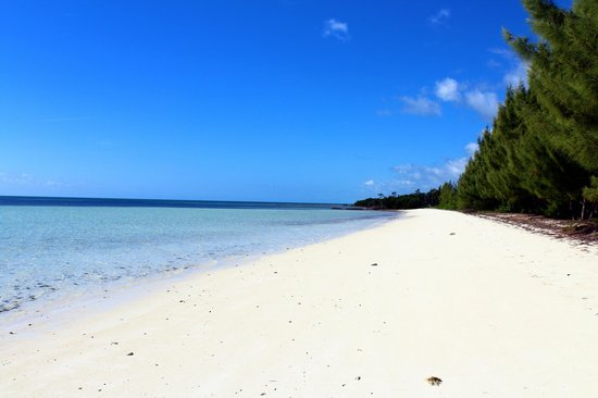 Chad4Nature Tours - Private Tours:                   Beach where you eat and Snorkel