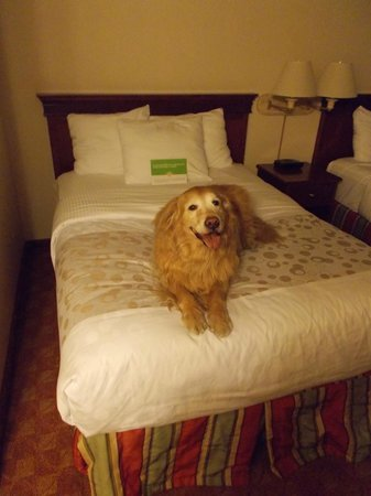 La Quinta Inn & Suites Anaheim: Bow wow
