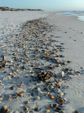 St. Joseph Peninsula State Park: Shells everywhere