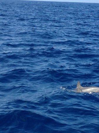 Kona Ocean Adventures:                   dolphins!                 