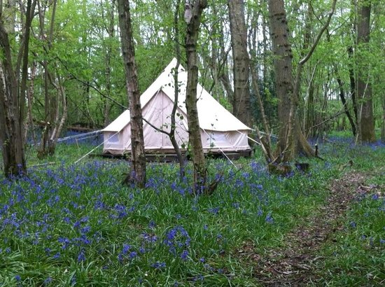 Eco Camp UK - Wild Boar Wood Campsite: Bluebells out in Spring