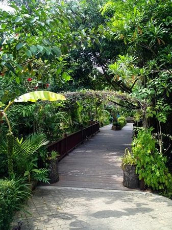 Sunda Resort:                   path to villa