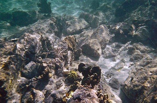 Scott Beach: needlefish? in sandy hole at right