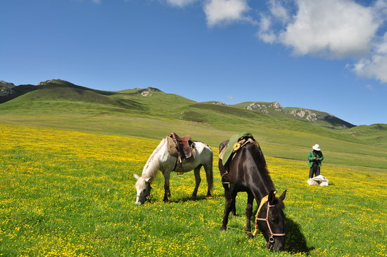 Maqu County, China:                   langmusi, wind horse trekking