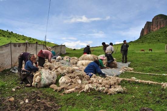 Maqu County, China:                   cutting wool, langmusi, wind horse trekking