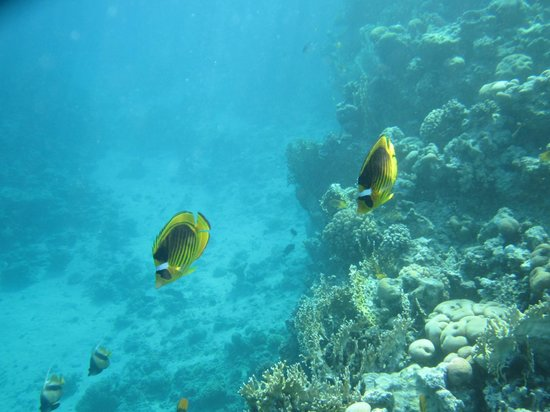 Sharks Bay Umbi Diving Village:                   Pic from snorkelling off the floating jetty!