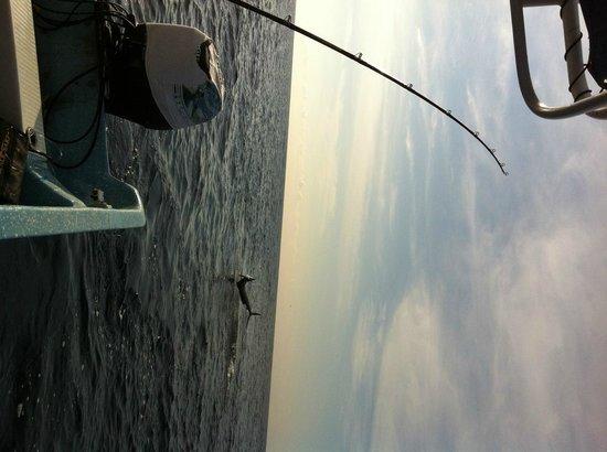 Puerto Escondido Fishing : Puerto Escondido, Mexico Fishing Trip