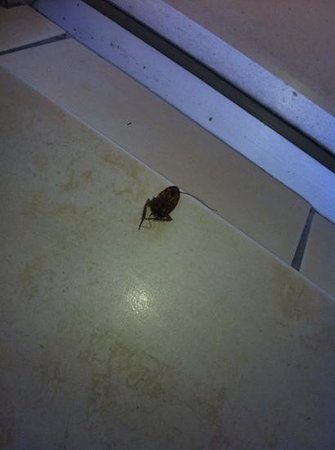 Focus Apartments:                   cockroaches everywhere!