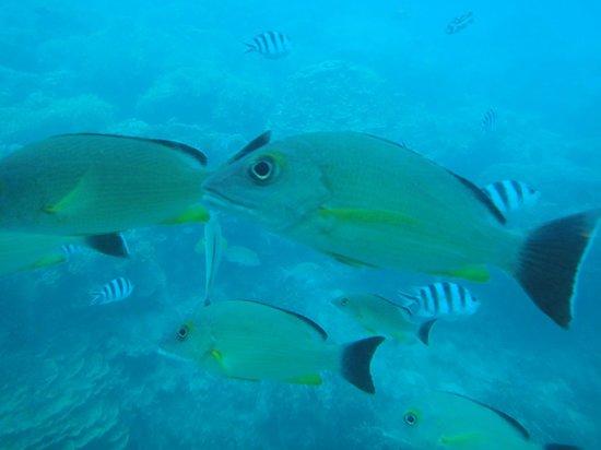 Fish Eye Marine Park: guam