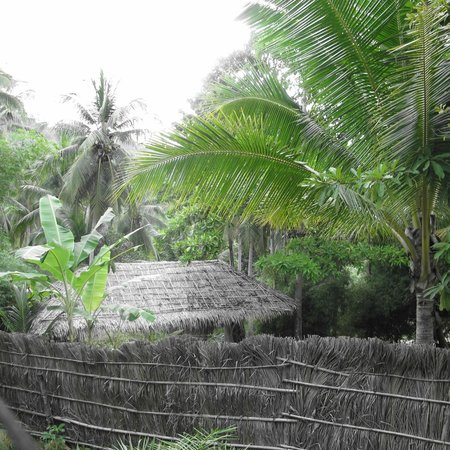 Jungle Club:                   view in grounds of hotel