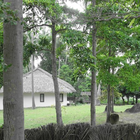Jungle Club:                   view in grounds