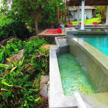 Jungle Club :                   pool