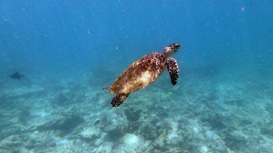 Kuramathi Island Resort: Turtle Housereef (June 2012)