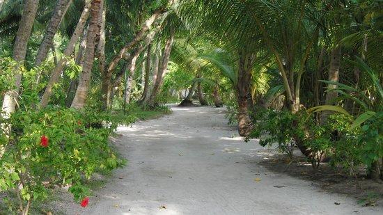 Kuramathi Island Resort: Mainstreet (June 2012)